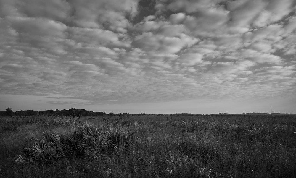 Florida dry prairie at Three Lakes Wildlife Management Area