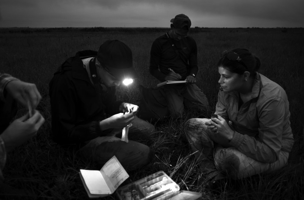 Headlamps are often needed when taking measurements. Stephen Mugel (hands), Greg Thomspon, Marcel Villar, and Emily Angell work as a team in the early dawn light.