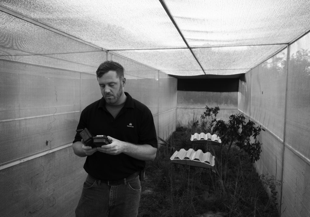 Andrew Schumann checks the wildlife cam in one of the Florida Grasshopper Sparrow rooms inside the enclosure.