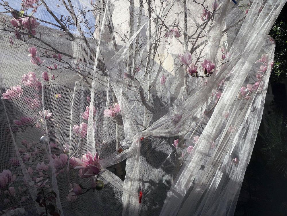 Wrapped-tree-in-flower,-2014.jpg