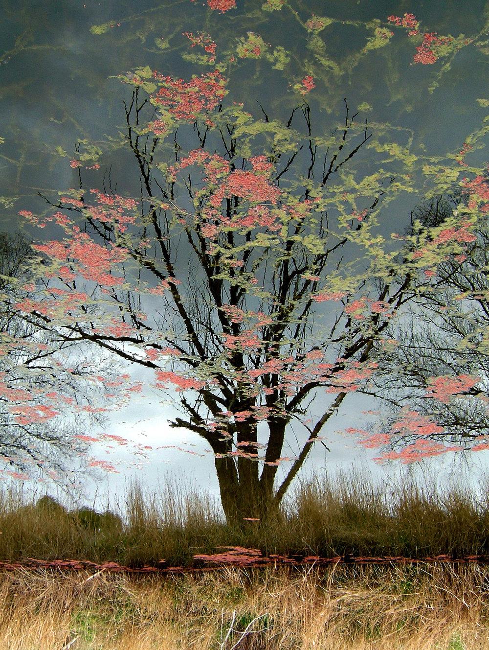 Algal-blooms,-Gunning-2004.jpg