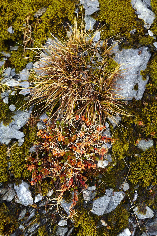 Sarah Ducker Fragilty Pomegranite FragilityLR.jpg