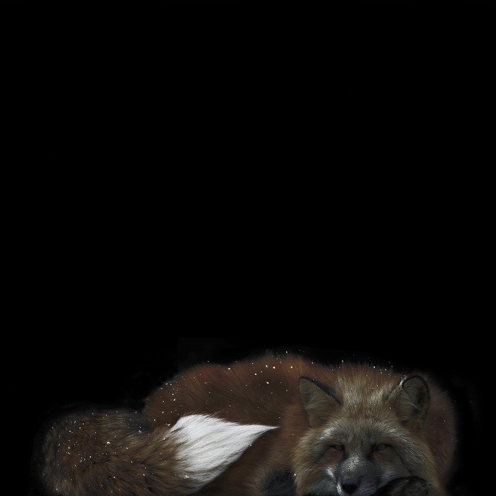 Foxfires / Kitsune-bi I