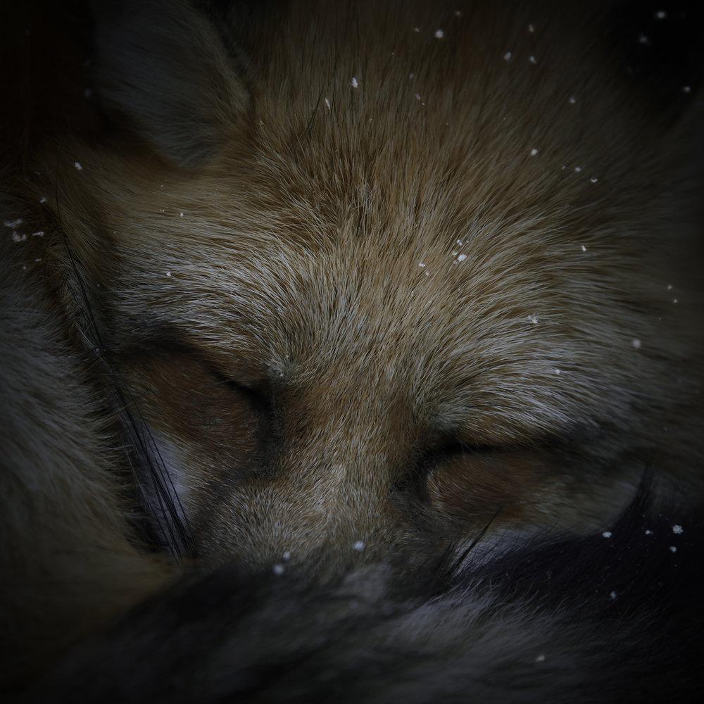 Foxfires / Kitsune-bi VI