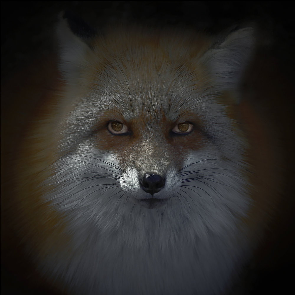 Foxfires / Kitsune-bi X