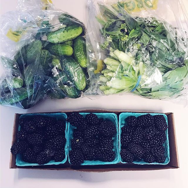 Look at these lovelies I picked up at the @tumwaterfarmersmarket 😍 - picklin' cucumbers - basil - baby bok - mammoth blackberries . Blackberries are going into mini #veganketo cheesecakes 🤤🤤 • • • • #farmersmarket #localbusiness #localproduce #blackberries #keto #vegano #veganfoodporn #organicfood #fermentation #lowcarbvegan #fatforfuel #sugarfree #dairyfreeketo #glutenfreeketo #plantpowered #vegansofinstagram #veganfoodshare #berryseason #cleanfood #ketosis #ketodiet