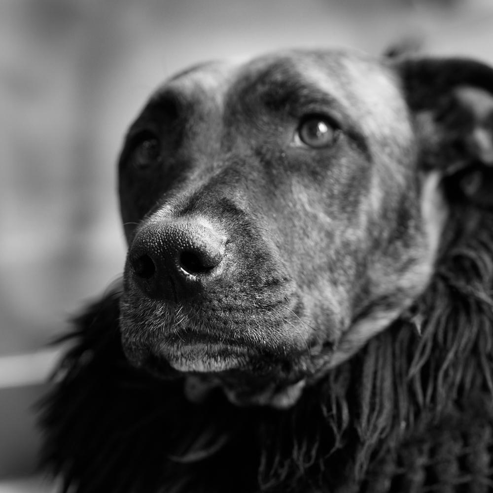 Poppy   Mindhiveのアイドル犬。オフィスを歩き回ったり、呼ばれていない会議に参加したり。存在価値が日々高まっています