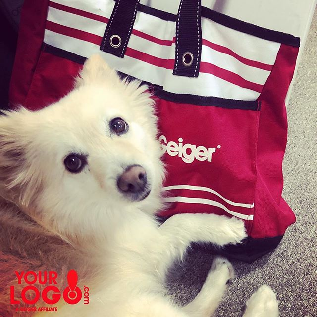 We love our office pup, Yettee! Do You have a work buddy you can't go to work without!? 🦊🐾🐕🐾🐩🐾🐈🐾🐶 #yourlogomatters #geigergetsit #dogsofinstagram #doggylove #yourbrandsbestfriend