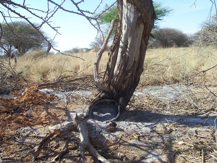 Deforestation. Credits: Simon Mumuli, FAO SWALIM