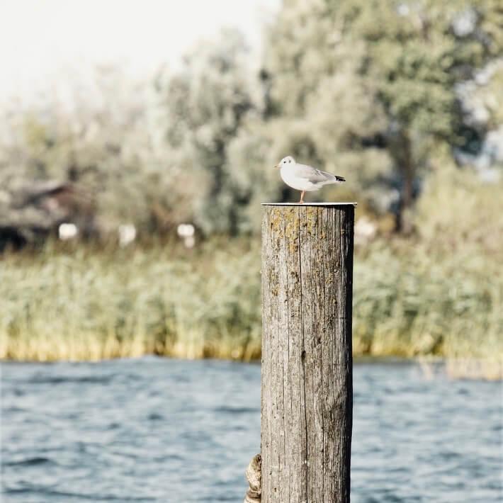 Möwe auf Pfosten im Bodensee