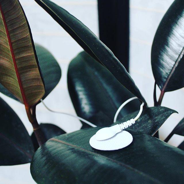 Sound Sauna. The Oddly Satisfying Spa's plant-powered ambient sound room 🌱🌿Collab w @datagrdn x @luxuryescapism #otherworldnyc #plants #plantsofinstagram #spa