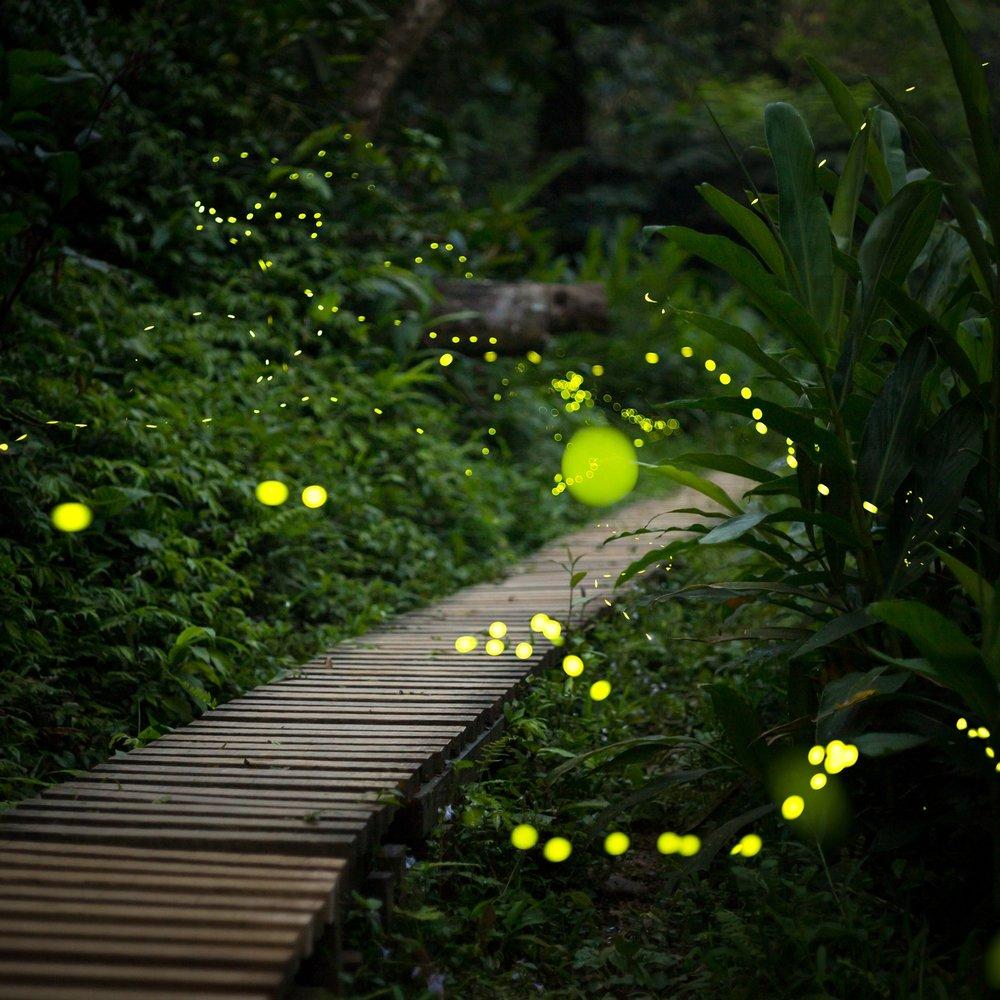 Fairy Light Lit Pathways