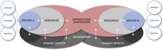 FIGURE 2 – Simplified dynamics of resource-sharing interactions and dynamic effects in natural ecosystems