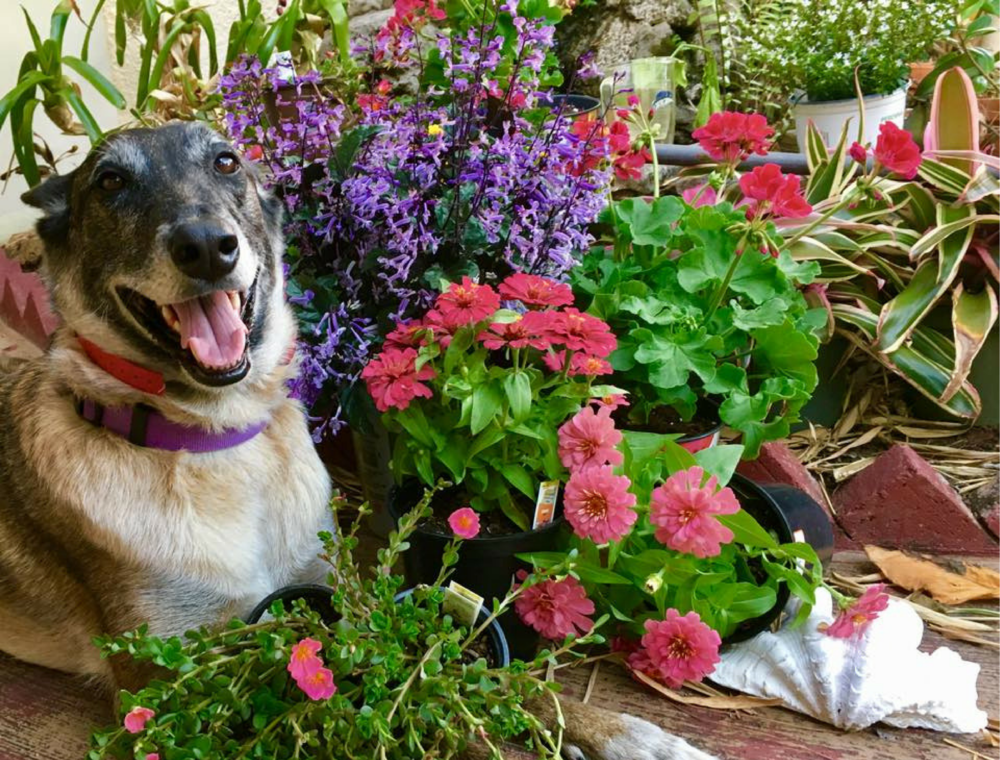 Dogs in Bloom training testimonials