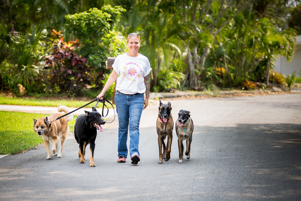 Palm Beach Dog Training Pack Walk