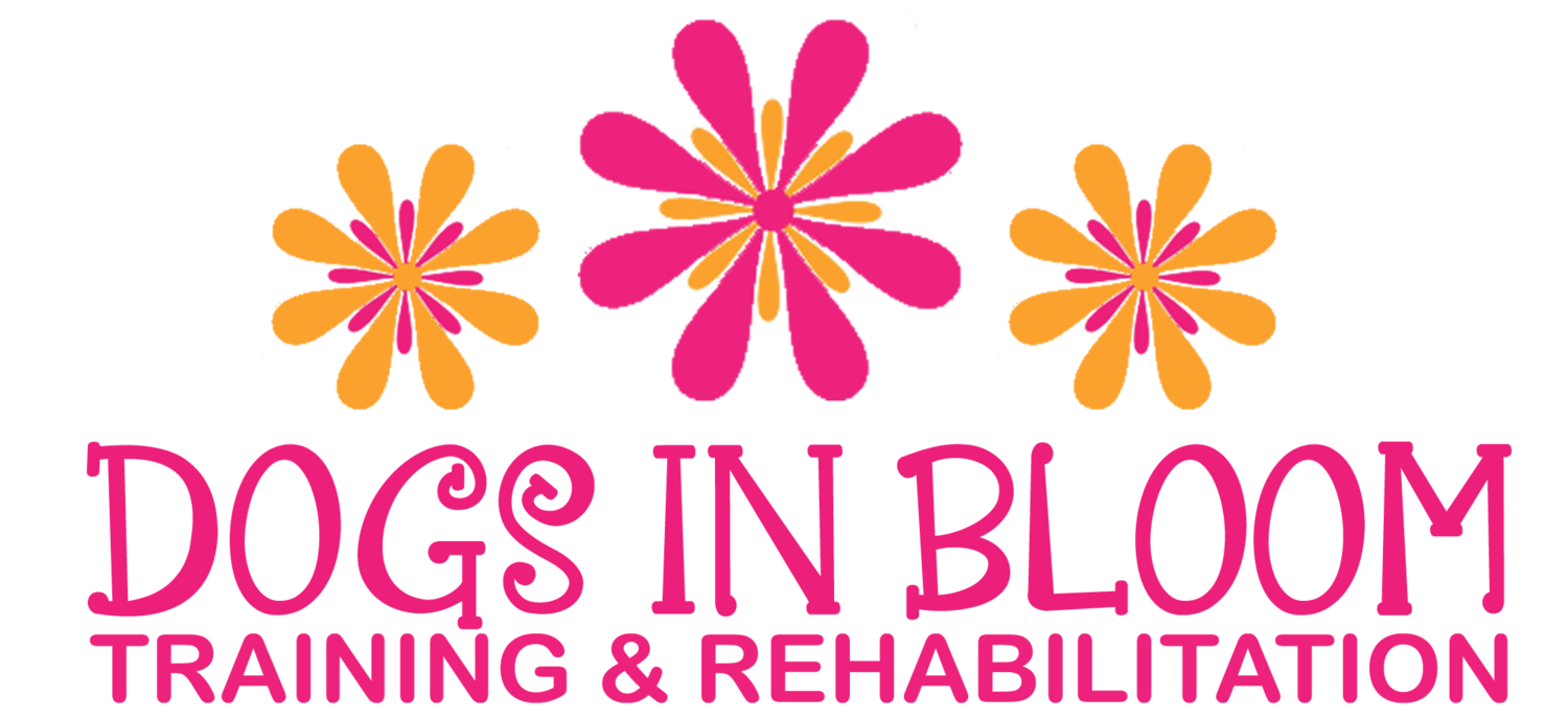 Dogs In Bloom | Treasure Coast Dog Training