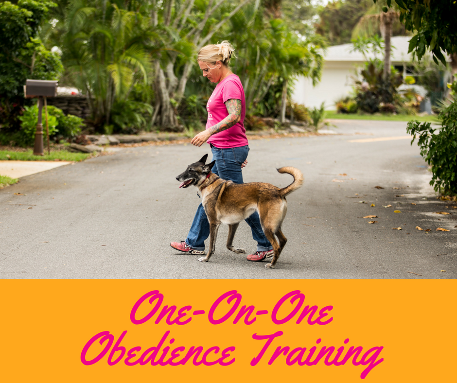 obedience training.png