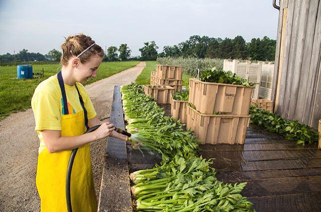Photo from farmflavor.com