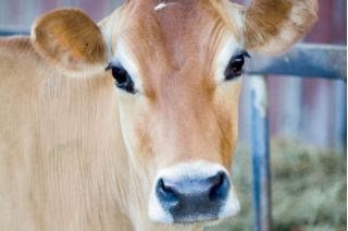 The University of Kentucky has committed to offering its students Udderly Kentucky milk, which is produced and processed by the state's dairy farmers.