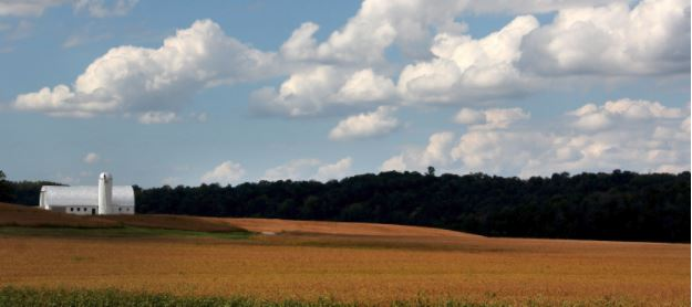 Kentucky soybeans
