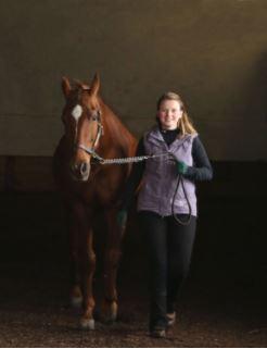 Horses — KyFoodandFarm com