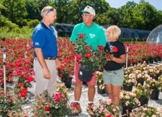 Robbie Smith, Keith Veech, andShawn Veech examine the roses.