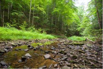 A stream runs through a Kentucky forest.PHOTO: Matt Barton