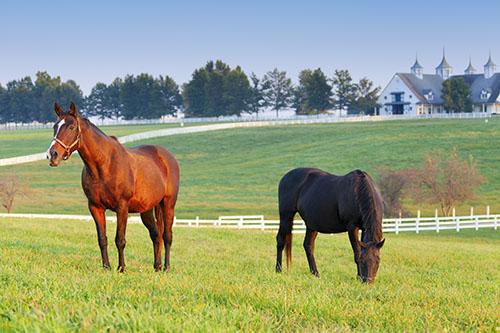 horse farm - w.jpg