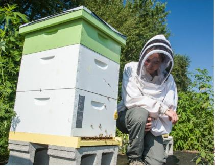 The honeybees are active, as Clare Rittschof checks one of her hives at UK's Spindletop Farm. Photo by Stephen Patton
