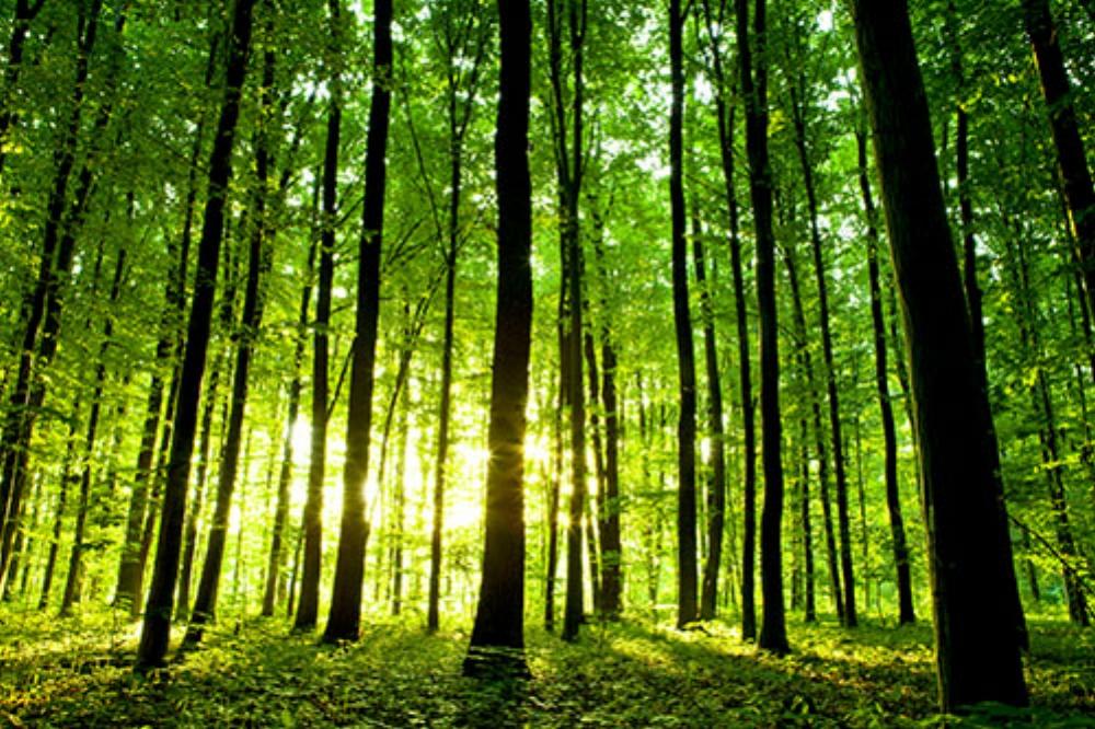 forest-w.jpg