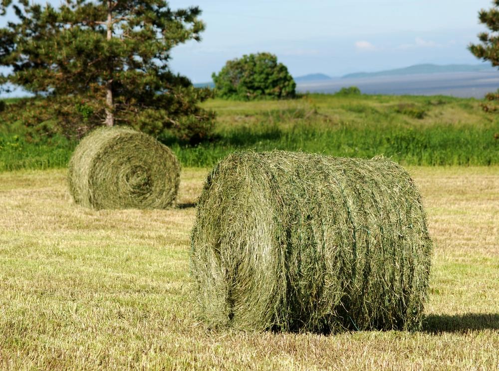 round hay bales.jpg