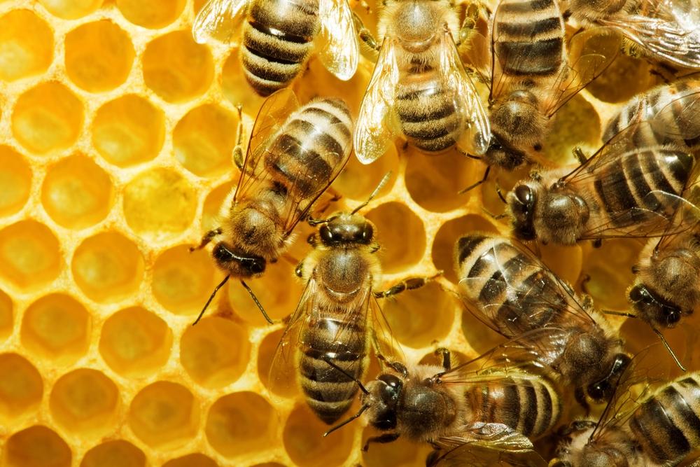 bees honey comb 1.jpg