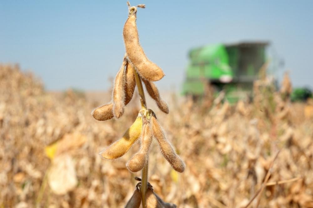 soybeans-sm.jpg