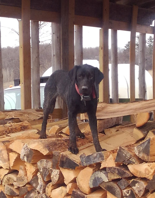 BRM-Family-Dog-Photo-Web.jpg