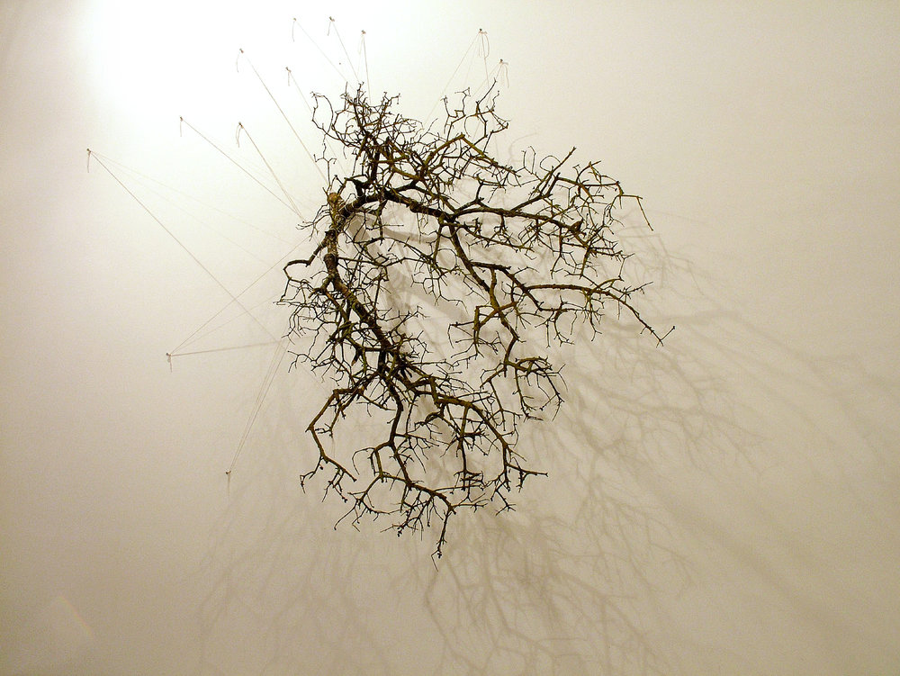 Drawing with Branch