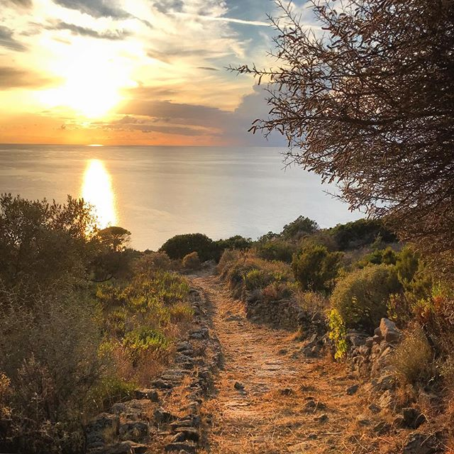 In difesa della Natura, oggi e sempre! 💚💙 #IoStoConGreta #isoladelgiglio #giglionelblu #sunset #island #islandlife #nature #earth #beautiful #world #sun #tree #sea #ocean #igersmaremma #apartment #volgotoscana #giglionews #prolocoisoladelgiglio #holiday #travel #mytinyatlas #landscapephotography #landscape #amazing #tuscany #toscana #italy #italia