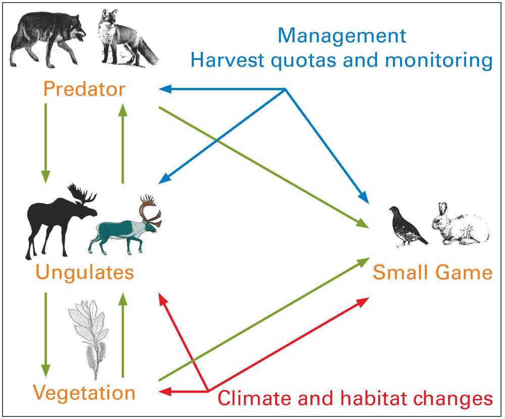 Figure 1. A conceptual model outlining the relations that will be addressed in SUSTAIN's case studies on terrestrial low- and sub-Arctic ecosystems. Graphics: Jan Roald / Norwegian Polar Institute