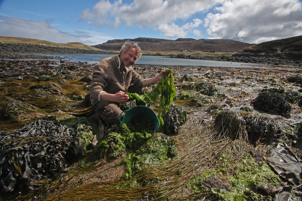 John Cunningham, JONAA's Marine Science Editor collecting seaweed in the Scottish Hebrides. JONAA©John Cunningham