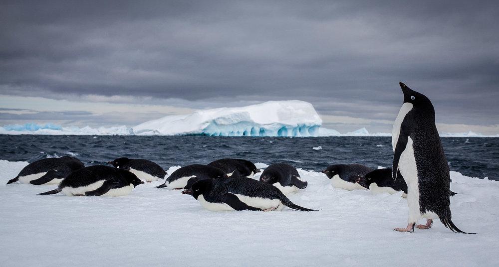 Antarctica.  JONAA©Ragnar Axelsson, RAX