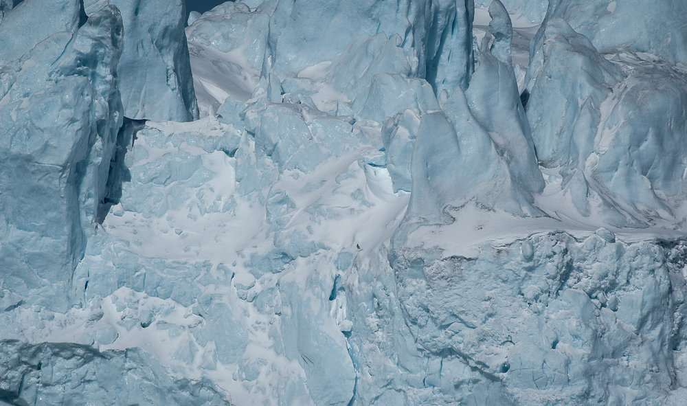 Arctic ice. A single seagull flies by a massive iceberg off Greenland's North-West coast.   JONAA©Kristjan Fridriksson
