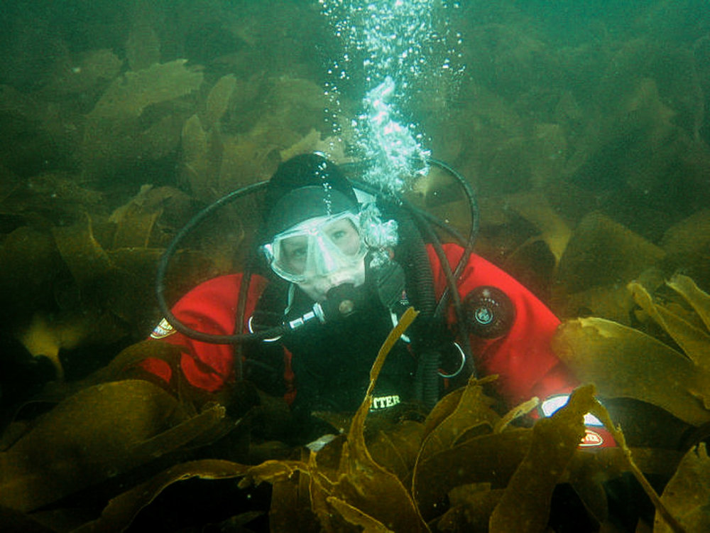 The scientist working in a forest of Kelp.