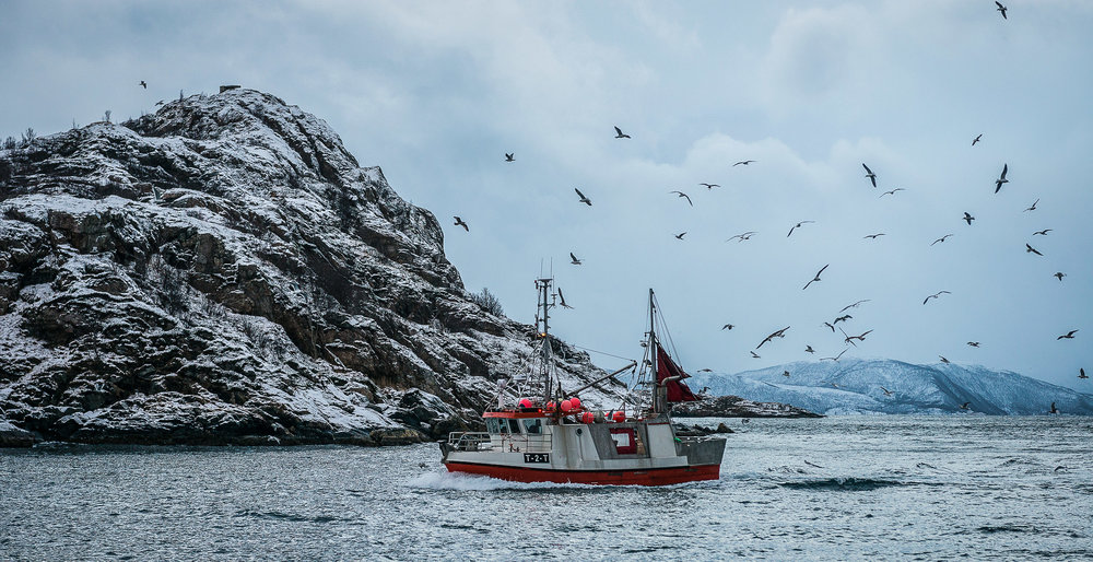 The possibility of fish-waste fed bacteria being able to produce eco-friendly, biodegradable plastic may contribute greatly to fighting plastic waste in nature. Photographed off the coast of North Norway. JONAA©Linnea Nordström