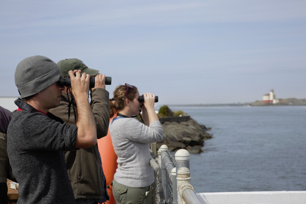 Spotting Red Phalaropes at the South Jetty. Photo by Lila Bowen