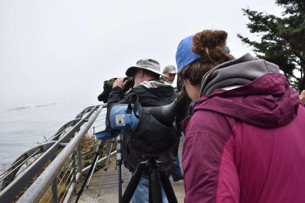 Birding at Simpson Reef Overlook. Photo by Taylor Brooks