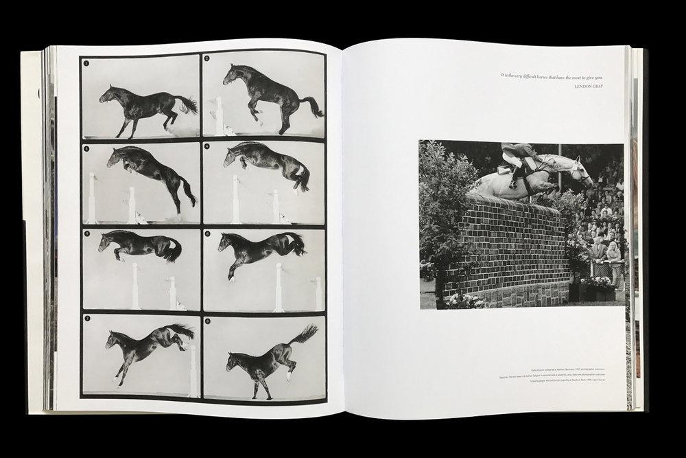 KK-Horse-4.jpg