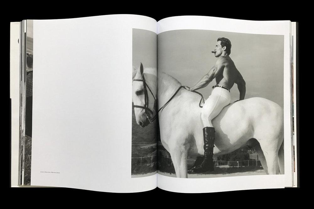 KK-Horse-5.jpg