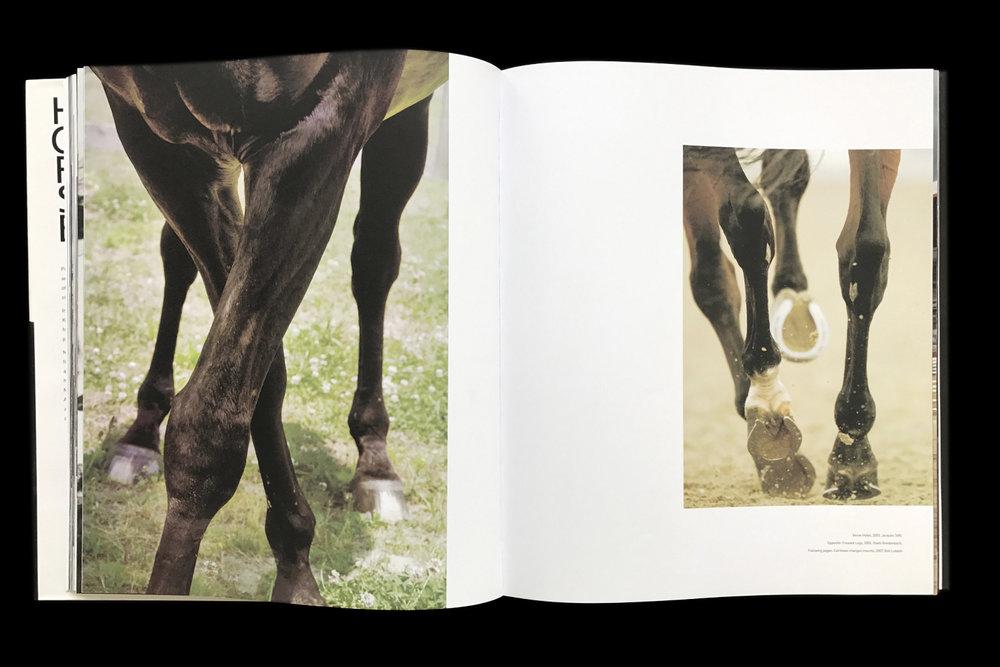 KK-Horse-10.jpg