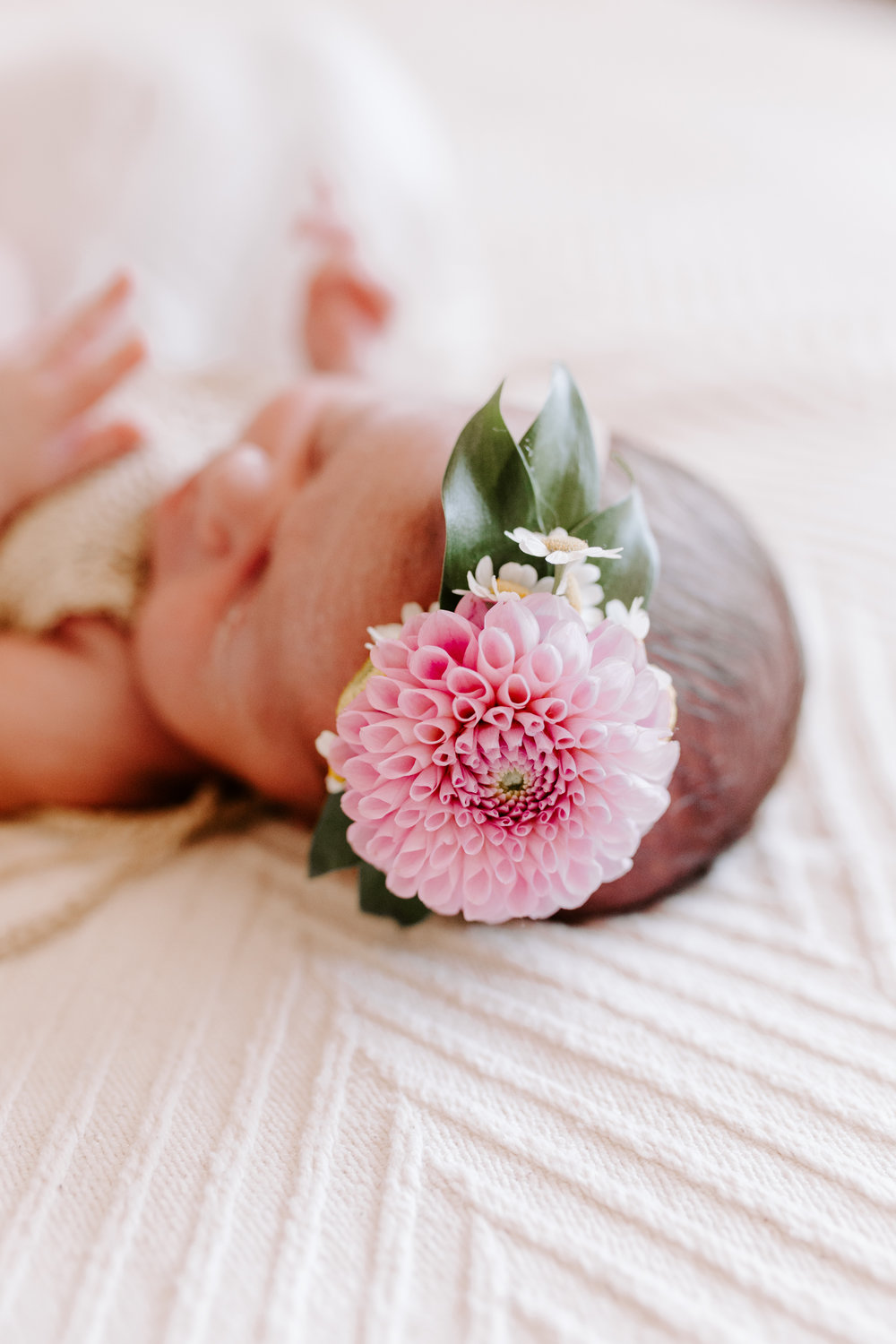 los gatos newborn photographer
