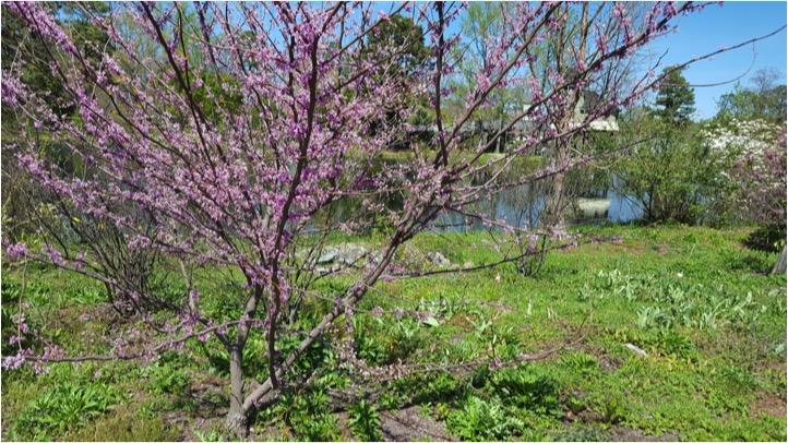 SP2 Web Nature Photo.jpg