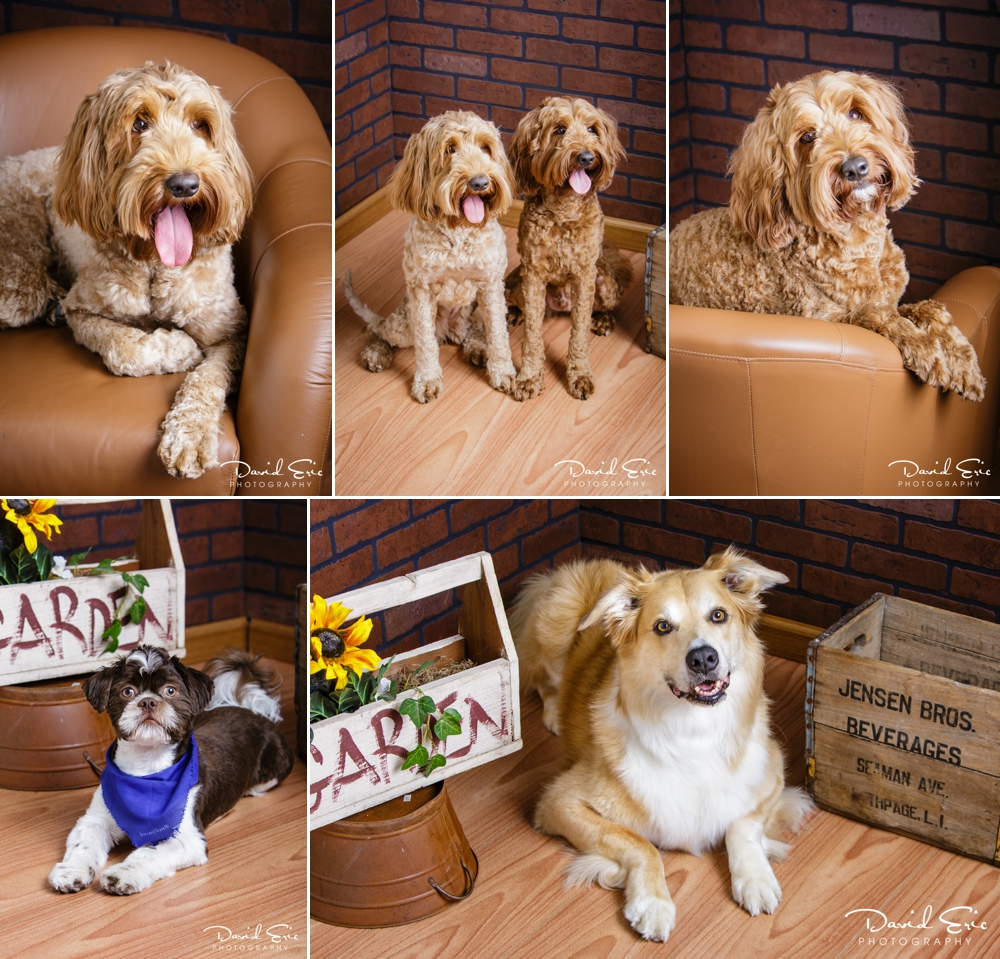 Pet-Portrait-Days-Collage-4.jpg